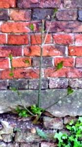 wall4